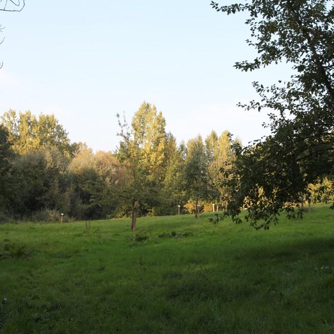 Burreken_boomgaard Perreveld_573