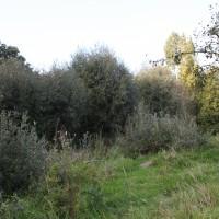 Burreken_boomgaard Perreveld_590